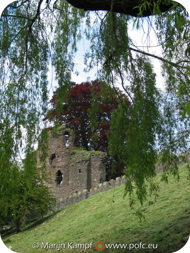 12366 Abergavenny castle through willow tree.jpg