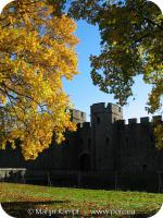19848 Autumn Trees Cardiff Castle.jpg