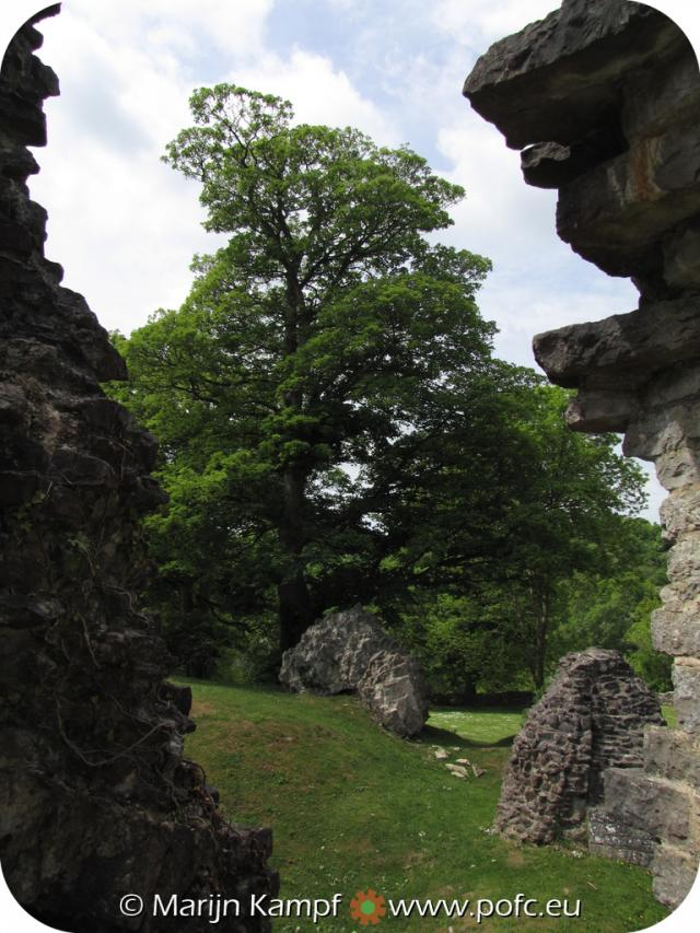 SX14686 Tree in courtyard St Quentin's Castle, Llanblethian, Cowbridge.jpg